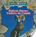 libro Bighorn Sheep / Carnero De Canada